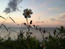 在太平洋上的日落-从Princeville的看法在考艾岛海岛,夏威夷上 图库摄影