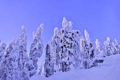 在太平洋海岸的冻树在冬天 免版税库存照片