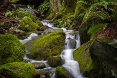在太平洋西北地区的美丽的雨林小河 图库摄影
