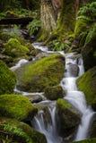 在太平洋西北地区的美丽的雨林小河 免版税图库摄影