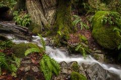 在太平洋西北地区的美丽的雨林小河 库存照片