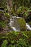 在太平洋西北地区的美丽的雨林小河 库存图片