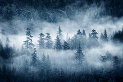 在太平洋西北地区的雨林云彩 库存图片