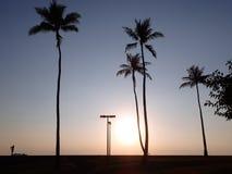 在太平洋的日落有光的通过椰子tre 库存图片