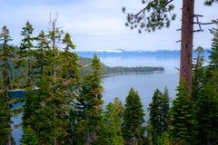 在太浩湖,加利福尼亚银行的杉树  免版税库存照片
