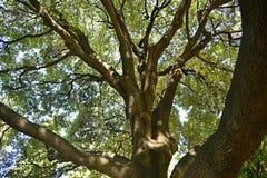在太阳下的大树 免版税库存照片