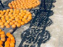 在太阳下的柿子 免版税库存照片