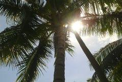 在太阳下的椰子树 免版税库存照片