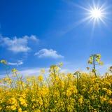 在太阳下的黄色强奸领域 库存图片