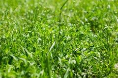 在太阳下的绿草 免版税库存图片