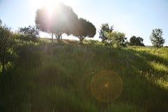 在太阳充满的消极空间的树 免版税库存图片