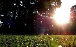 在太阳光下的草坪 免版税库存图片