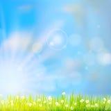 在太阳光的夏天草 10 eps 免版税图库摄影