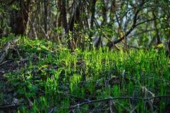 在太阳光芒下的新鲜的草 库存照片