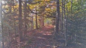 在太阳光芒沐浴的森林道路 库存图片