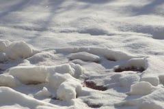 在太阳光,背后照明的新雪盖 库存照片