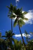 在太阳前面的棕榈树 免版税库存图片