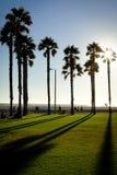 在太阳加利福尼亚威尼斯海滩美国前面的棕榈树 免版税图库摄影