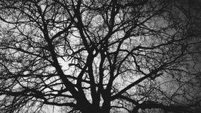 在太阳后的树在黑背景 免版税库存图片