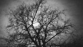 在太阳后的树在黑背景 库存图片