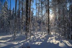 在太阳天气的冬天木头 免版税库存照片