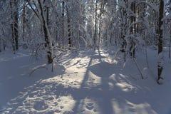 在太阳天气的冬天木头 免版税图库摄影