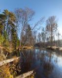 在太阳天气的秋天木头在河 库存照片