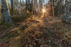 在太阳天气的秋天木头 库存图片