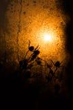 在太阳射线下的干草棍子 库存照片