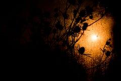 在太阳射线下的干草棍子 免版税图库摄影