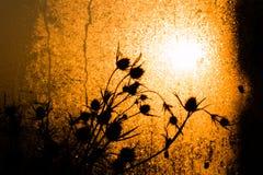 在太阳射线下的干草棍子 库存图片