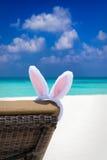 在太阳椅子的兔宝宝耳朵在热带海滩 库存图片