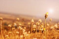 在太阳火光下的草花 免版税图库摄影