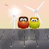 在太阳电池板的猫头鹰 库存照片