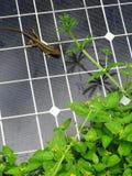 在太阳电池板画象的蜥蜴 免版税库存照片