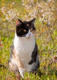 在太阳的杂色猫 免版税图库摄影
