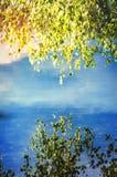 在太阳的湖边 免版税库存图片