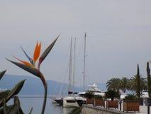 在太阳的焕发的下鹤望兰,沐浴在海在景色秀丽蒂瓦特 库存图片