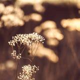 在太阳的秋天领域增长的野生植物发出光线 库存图片