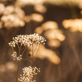 在太阳的秋天领域增长的野生植物发出光线 免版税库存图片