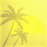 在太阳的背景的棕榈 库存照片