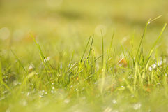 在太阳的绿草放光,小景深 图库摄影