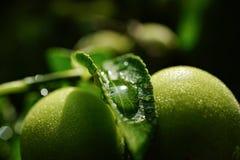 在太阳的Waterdrop 免版税图库摄影
