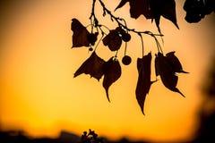 在太阳背景的树早午餐 免版税库存照片