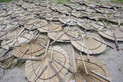 在太阳轻的死的手扶的爱好者叶子棕榈叶下 库存图片