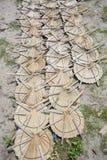 在太阳轻的死的手扶的爱好者叶子棕榈叶下 免版税库存照片
