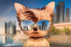 在太阳镜的狗在前面旅行背景中站立 免版税图库摄影