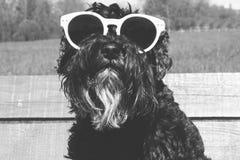 在太阳镜的狗 库存图片