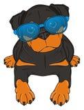在太阳镜的狗 免版税图库摄影
