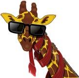 在太阳镜的长颈鹿 库存图片